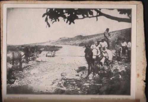 נוריס סוסים