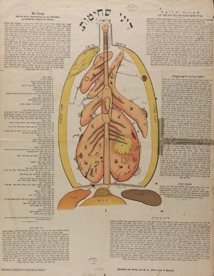 תמונת הריאה1